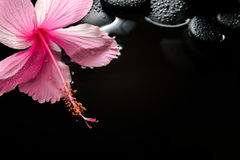 Spa concept  of  blooming pink hibiscus and zen stones with drop Stock Photo