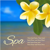 Spa concept with blurred seaside background and realistic vector frangipani Royalty Free Stock Photo