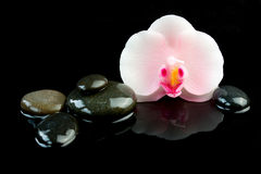 Spa concept of candle in the shape of orchid flower and pebbles on black background Royalty Free Stock Photography