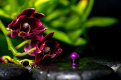 Spa concept of dark cherry flower orchid phalaenopsis and lilac Stock Photo