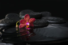 Spa concept  of dark purple orchid (phalaenopsis) with bud Royalty Free Stock Image