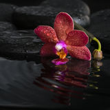 Spa concept  of dark purple orchid (phalaenopsis) Stock Photos