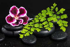Spa concept of deep purple flower, green branch Stock Image