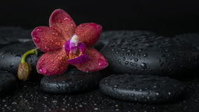 Spa concept  of deep purple orchid (phalaenopsis) Stock Images