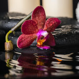 Spa concept of deep purple orchid (phalaenopsis), zen stones Stock Photo
