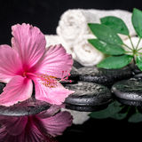 Spa concept of delicate pink hibiscus, green leaf shefler with d Stock Photo