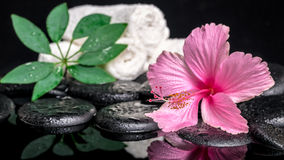 Spa concept of delicate pink hibiscus, green leaf shefler with d Stock Photos
