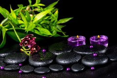 Spa concept of flower orchid, phalaenopsis, zen basalt stones wi Royalty Free Stock Photography