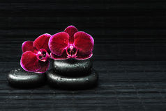 Spa concept. Flower of orchid and stones Stock Photos