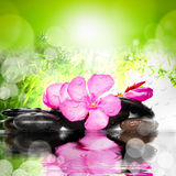 Spa concept. Flower and stones. Stock Photos