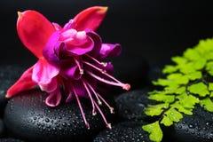 Spa concept of fuchsia flower, green branch Stock Photos