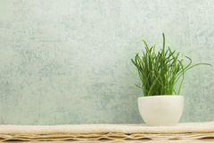 Spa concept with grass in bowl on grey background Royalty Free Stock Image