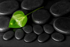 Spa concept of green leaf Calla lily on black zen stones with de Stock Photos