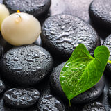 Spa concept of green leaf Calla lily and candles on zen basalt s Royalty Free Stock Images