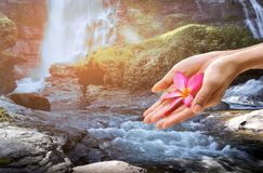 Conceptual hand holding plumeria flower over Vachiratharn Waterfall National Park Chaing Mai Thailand royalty free stock photography