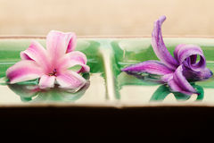 Spa concept with scented hyacinth flowers Royalty Free Stock Photos