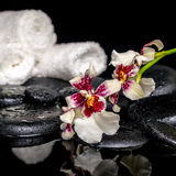Spa concept of orchid Cambria flower with drops and white towels Royalty Free Stock Photography