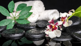 Spa concept of orchid Cambria flower, green leaf shefler with dr Royalty Free Stock Image