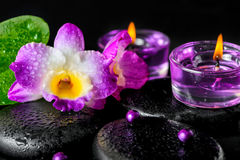 Spa concept of orchid flower, zen basalt stones with drops, lila Royalty Free Stock Image