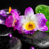 Spa concept of orchid flower, zen basalt stones with drops, lila Stock Images