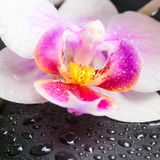 Spa concept of orchid flower and zen stones with drops Stock Photos