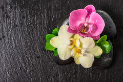 Spa concept with orchid flowers and green leaves Stock Photo