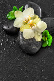 Spa concept with orchid flowers and green leaves with water drop Stock Image