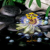 Spa concept of passiflora flower, branches, towels, zen basalt s Stock Photos