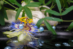 Spa concept of passiflora flower, green branch, towels and pearl. Beads with drop on zen stones in ripple reflection water stock photo