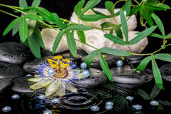 Spa concept of passiflora flower, green  branches, towels, zen b Royalty Free Stock Image