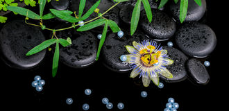 Spa concept of passiflora flower, green  branches,  zen basalt s Royalty Free Stock Images