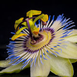 Spa concept of passiflora flower Stock Images