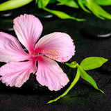 Spa concept of pink hibiscus flower and twig bamboo on zen basal Royalty Free Stock Photography
