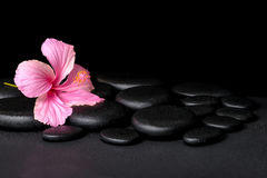 Spa concept of pink hibiscus flower on zen basalt stone with dro Royalty Free Stock Photo