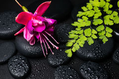 Spa concept with pink with red fuchsia flower Stock Image