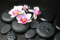 Spa concept with pink with red orchid flower Stock Photography