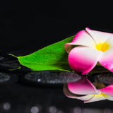 Spa concept of plumeria flower, green leaf kalla with drops on z Royalty Free Stock Photos