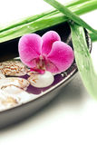 Spa concept: purple orchid, bamboo and shells Stock Photos