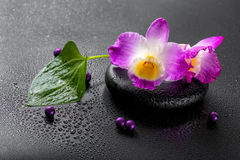Spa concept of purple orchid dendrobium with dew, green leaf and Royalty Free Stock Image