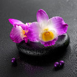 Spa concept of purple orchid dendrobium with dew and pearl beads Royalty Free Stock Images