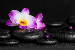 Spa concept of purple orchid dendrobium with dew, pearl beads on Stock Photography