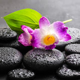 Spa concept of purple orchid dendrobium and green leaf Calla lil Royalty Free Stock Photography