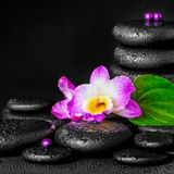 Spa concept of purple orchid flower, green leaf, pyramid zen bas Stock Photo