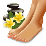 SPA concept with realistic female feet, frangipani and stones. Vector illustration. Stock Photos