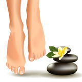 SPA concept with realistic female feet, frangipani and stones. Vector illustration. Royalty Free Stock Image
