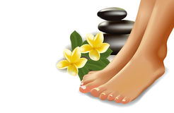 SPA concept with realistic female feet, frangipani and stones. Vector illustration. Stock Image