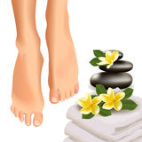SPA concept with realistic female feet, frangipani, towel, and stones. Vector illustration. Vector illustration of SPA concept with realistic female feet Royalty Free Stock Photography