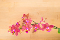 Spa concept, red orchid Stock Photography