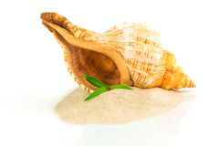 Spa concept with seashell and bamboo. Isolated on white background Royalty Free Stock Image