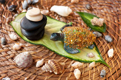 Spa concept of spa stones, turtle and sea shells Royalty Free Stock Images